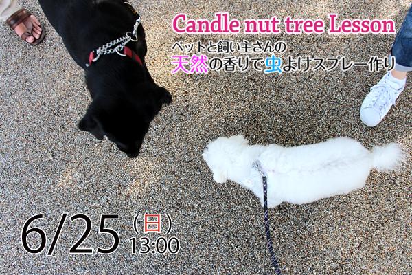 【参加者募集】ペットと飼い主さんの天然の香りで虫よけスプレー作り